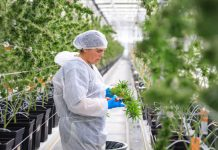 Tilray_EU_Campus_Portugal_Harvest